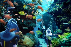 Discovery Cove: Grand Reef Video Update