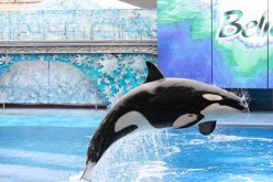 """Shamu Show, """"Believe"""" to be replaced in 2011"""