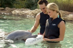 Discovery Cove offers sweet deals for Valentine's Day