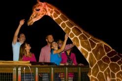 Serengeti Night Safari returns to Busch Gardens in light of Valentine's Day