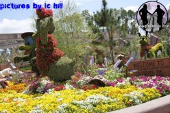 Disney teams up with HGTV for Epcot's 2011 Flower and Garden Festival