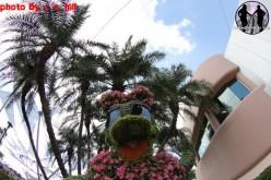 Epcot's International Flower and Garden Festival kicks off