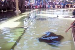 SeaWorld San Diego's New Ray Pool and Aquarium