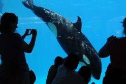SeaWorld quietly confirms VR Orca Experience
