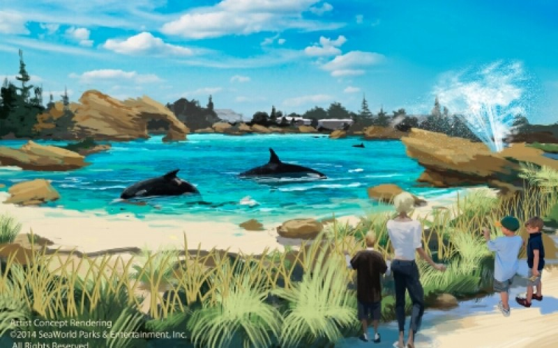 California Coastal Commission bans breeding at SeaWorld San Diego-What's next for the park?