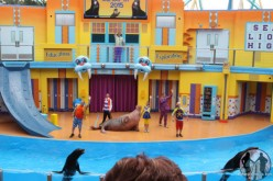 Clyde & Seamore graduate from high school as SeaLion High debuts at SeaWorld Orlando