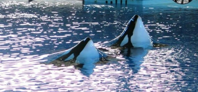 SeaWorld announces first quarter results, and spikes in attendance