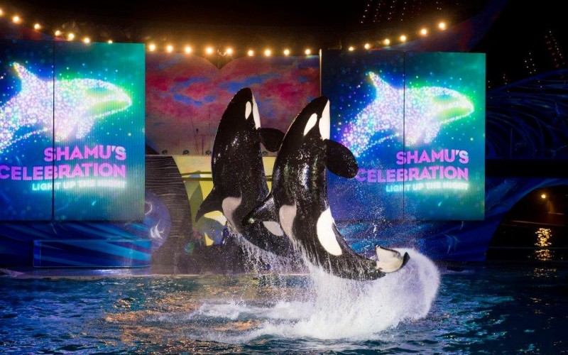 Splash into the night at SeaWorld and Aquatica Orlando with concerts, rides and nighttime summer fun!