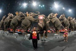 Feld Entertainment retiring elephants early-Could this be a clue to the Disney buyout rumor?