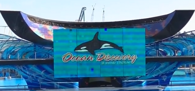 SeaWorld Orlando's Wild Days reminds us that we really need more parks like SeaWorld