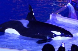 SeaWorld's new direction-Fans revolt, public cheers, and the good and bad of it all