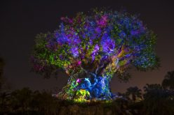 Disney releases details on Animal Kingdom nighttime festivities and opening date for new restaurant!