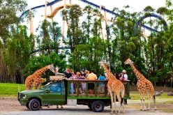 Latest theme park attendance figures show that people aren't done with animal parks just yet