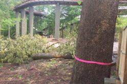 Construction on Busch Gardens Williamsburg's InvadR begins!