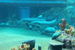 Underwater viewing dazzles at SeaWorld San Antonio's new Discovery Point