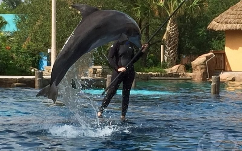 Swim with dolphins at the new Discovery Point at SeaWorld San Antonio