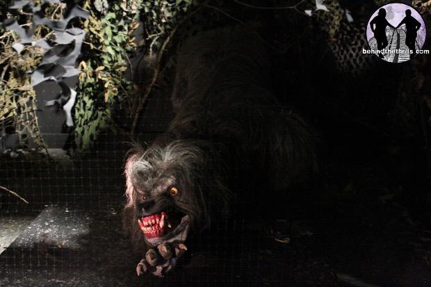 American Werewolf Remake